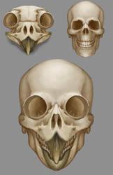 Anatomicae 26 - skull hybid studies by Luneder