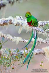 Magic Bird by juddpatterson