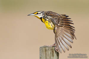 Wing Stretch by juddpatterson