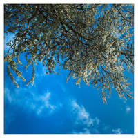 Blue tree by leoatelier