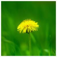 Yellow II by leoatelier