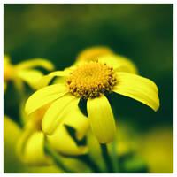 Petals by leoatelier