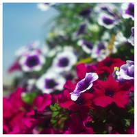Colors by leoatelier