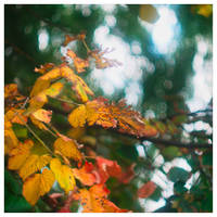 Autumn is back by leoatelier