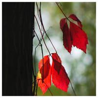 Autumn mood by leoatelier