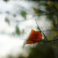 In the light of autumn by leoatelier