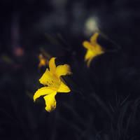 Yellow mood by leoatelier