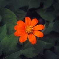 Little flower by leoatelier