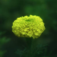 Le petit bouquet by leoatelier
