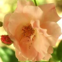 Real beauty comes from inside by leoatelier