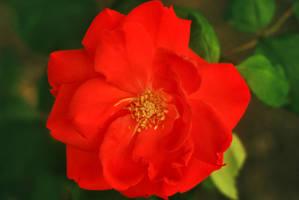 Red charm by leoatelier