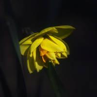 Resting in the shadow by leoatelier
