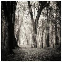 In the woods by leoatelier