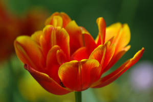 Red and yellow II by leoatelier