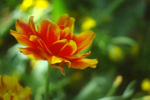 Red and yellow III by leoatelier