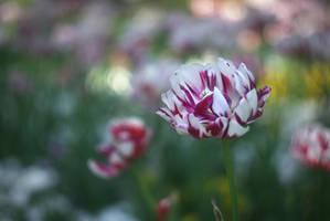 Beautiful memories V by leoatelier