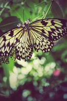 Yellow butterfly by Lydia-distracted