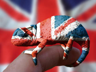 British Cameleon by square-eyed