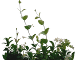 lateral foliage stock 2 by EveBlackwoodStock