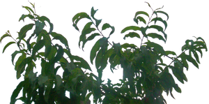 lateral foliage stock 3 by EveBlackwoodStock