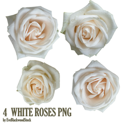 white roses PNG by EveBlackwoodStock