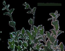 lateral foliage 8 by EveBlackwoodStock