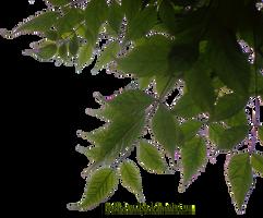Foliage corner PNG by EveBlackwoodStock
