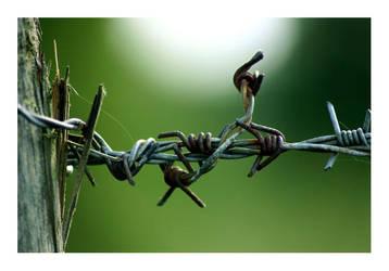 Wire by kiora