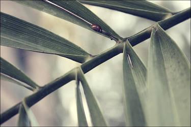 Ladybug by kiora