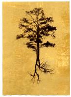 Tree I by justinelavoie