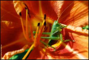 Green Grasshopper by CatherineNodet
