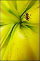 Ant by CatherineNodet