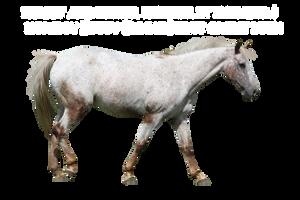 Appaloosa horse precut by emilygita