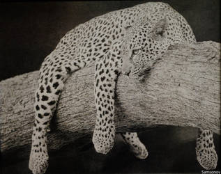 leopard by MSamsonov