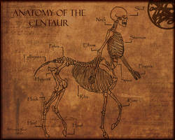 Anatomy of The Centaur by Shadowglove