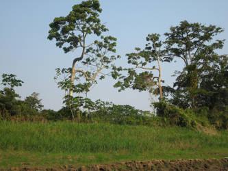 Neat Trees by Pistachio-Ice-Cream