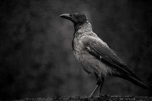 Black on Black by Dekus