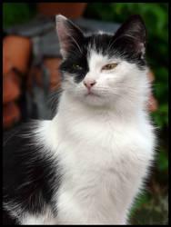 Cat  bw by Dreamk8