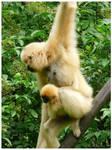 2 monkeys by Dreamk8