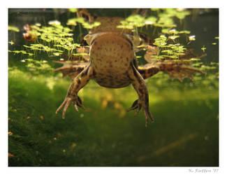 Frog from below by Dreamk8