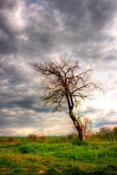 The tree by JordanGV