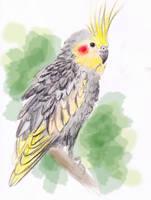 animal sketch: nympfensittich by Araless
