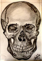 human skull by sachiko-hime