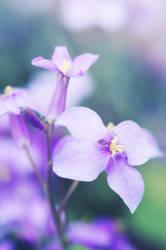 purple by JunJun510