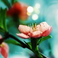 Daydream by JunJun510
