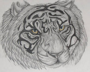 Sumatran Tiger by luhka