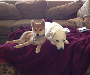 Jake and Nami by seth243