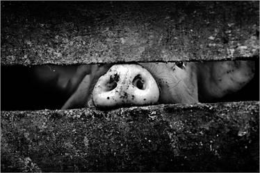 Peeping Tom by SAMLIM