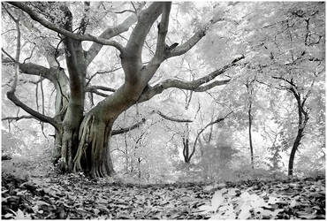 ...a place in dream by SAMLIM