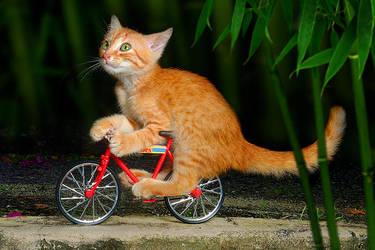 Cycling by SAMLIM